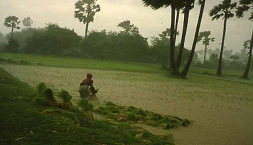 la-gente-del-arrozal