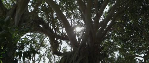 still-the-water-tree