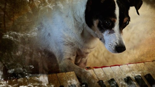 Heart of a Dog, de Laurie Anderson