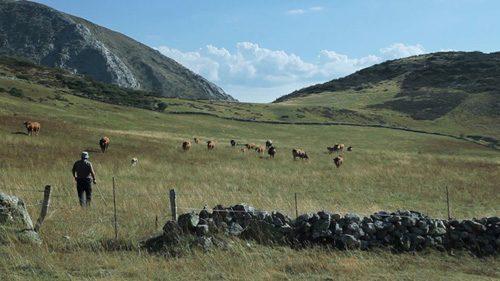 vida-vaquera-ramon-lluis-bande